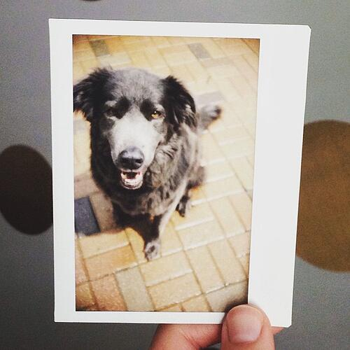 5_tips_photographing_pets